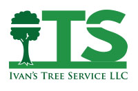 ivans-tree-logo