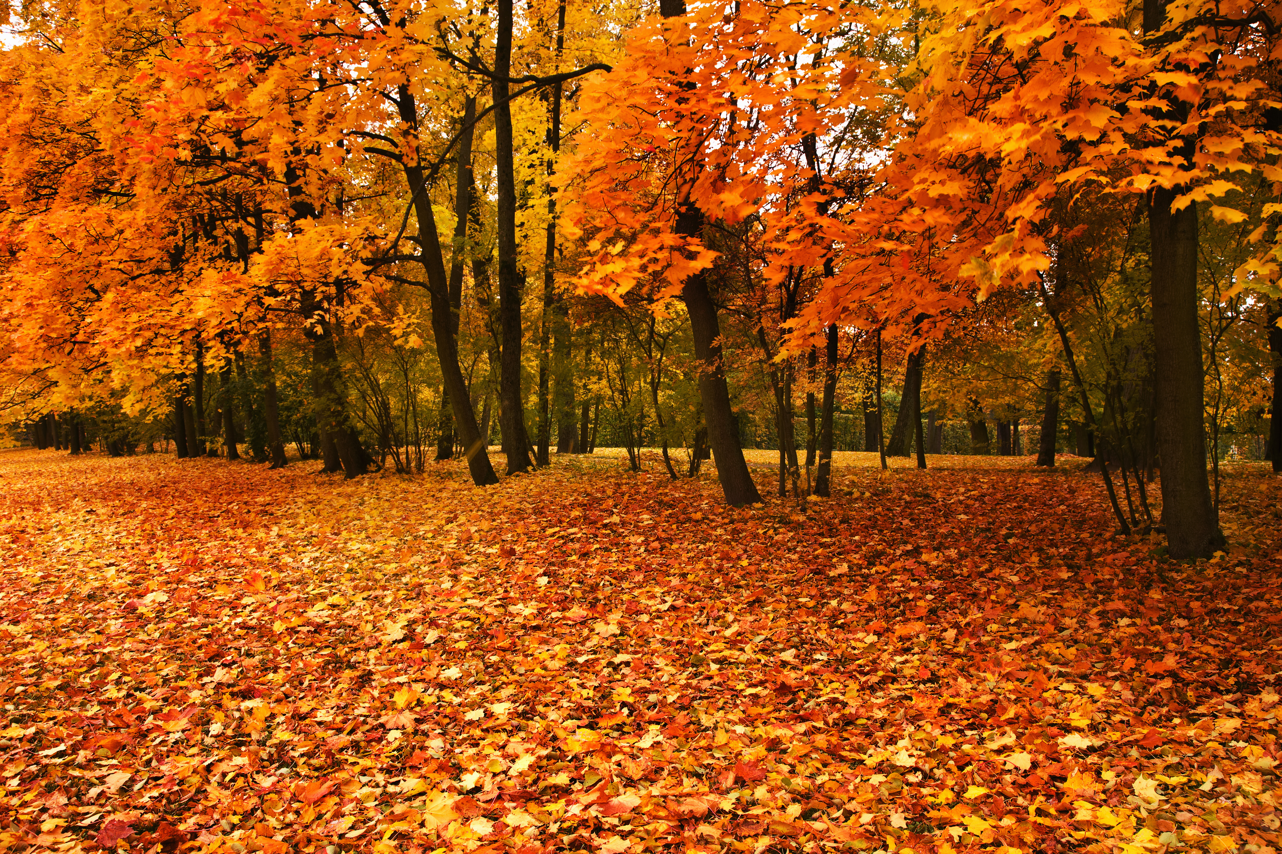 8 Things You Didn't Know About Fall Leaves