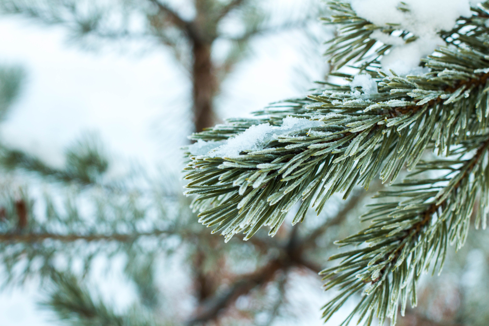 The Benefits of Winter Tree Services