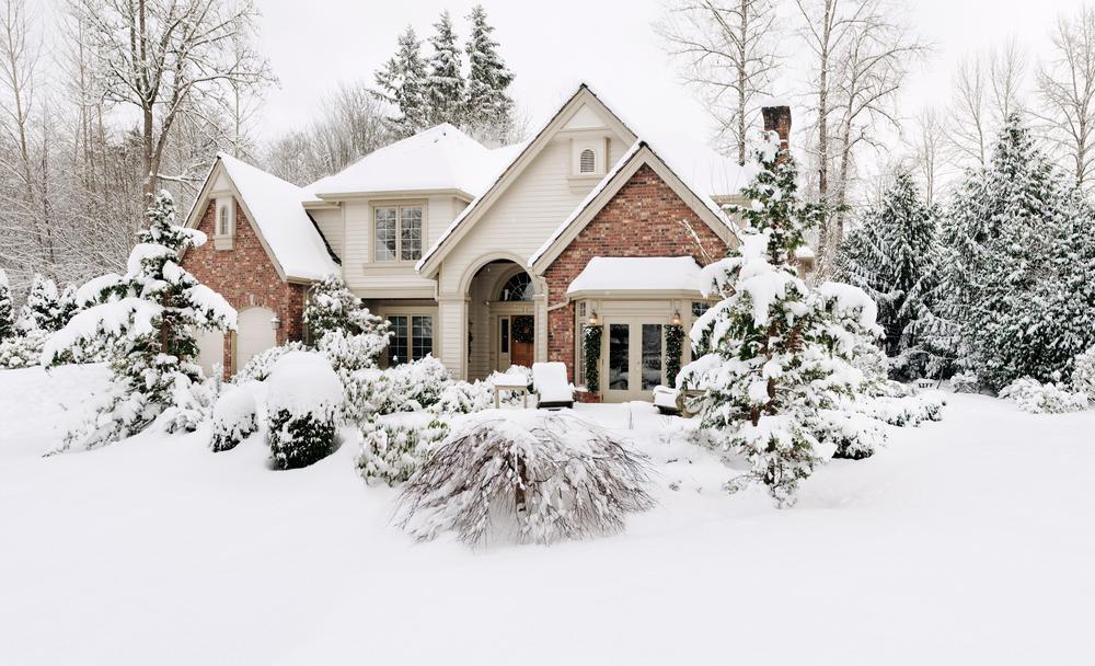 Preventing Winter Tree Damage