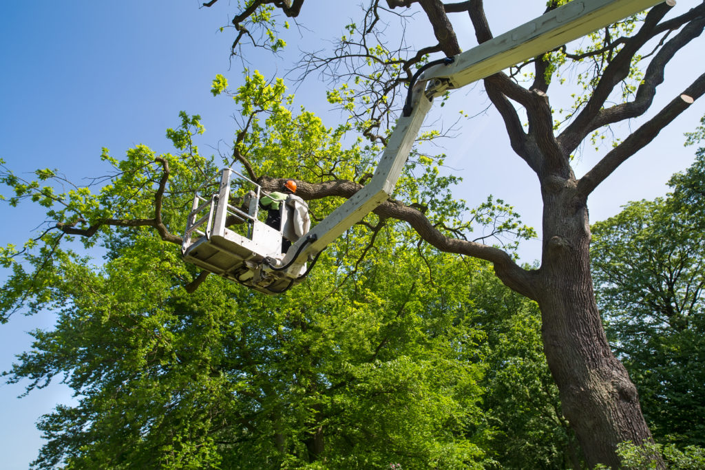 3 Ways to Know You Need to Call a Professional Tree Care Company