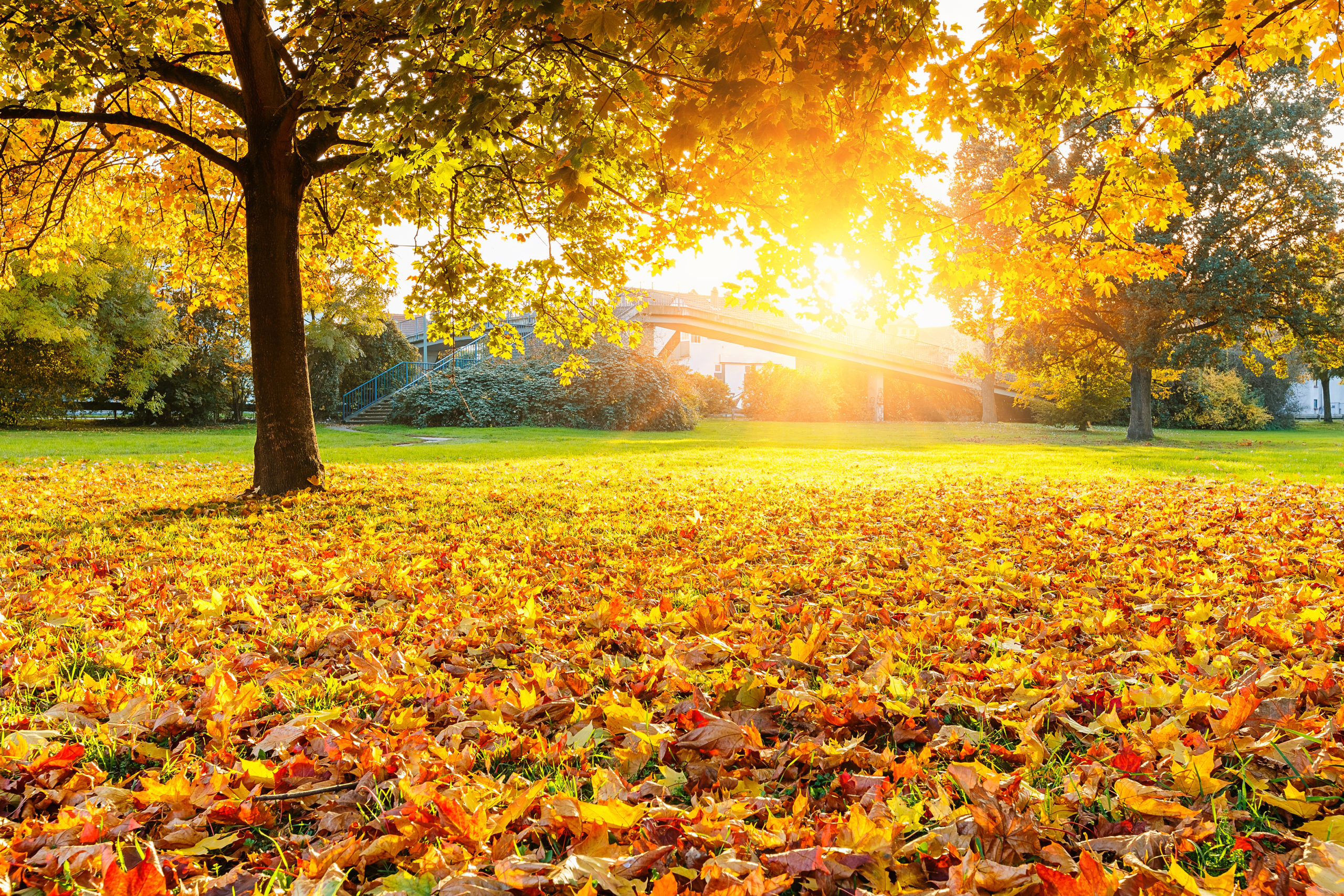 3 Reasons to Break out the Rake this Fall