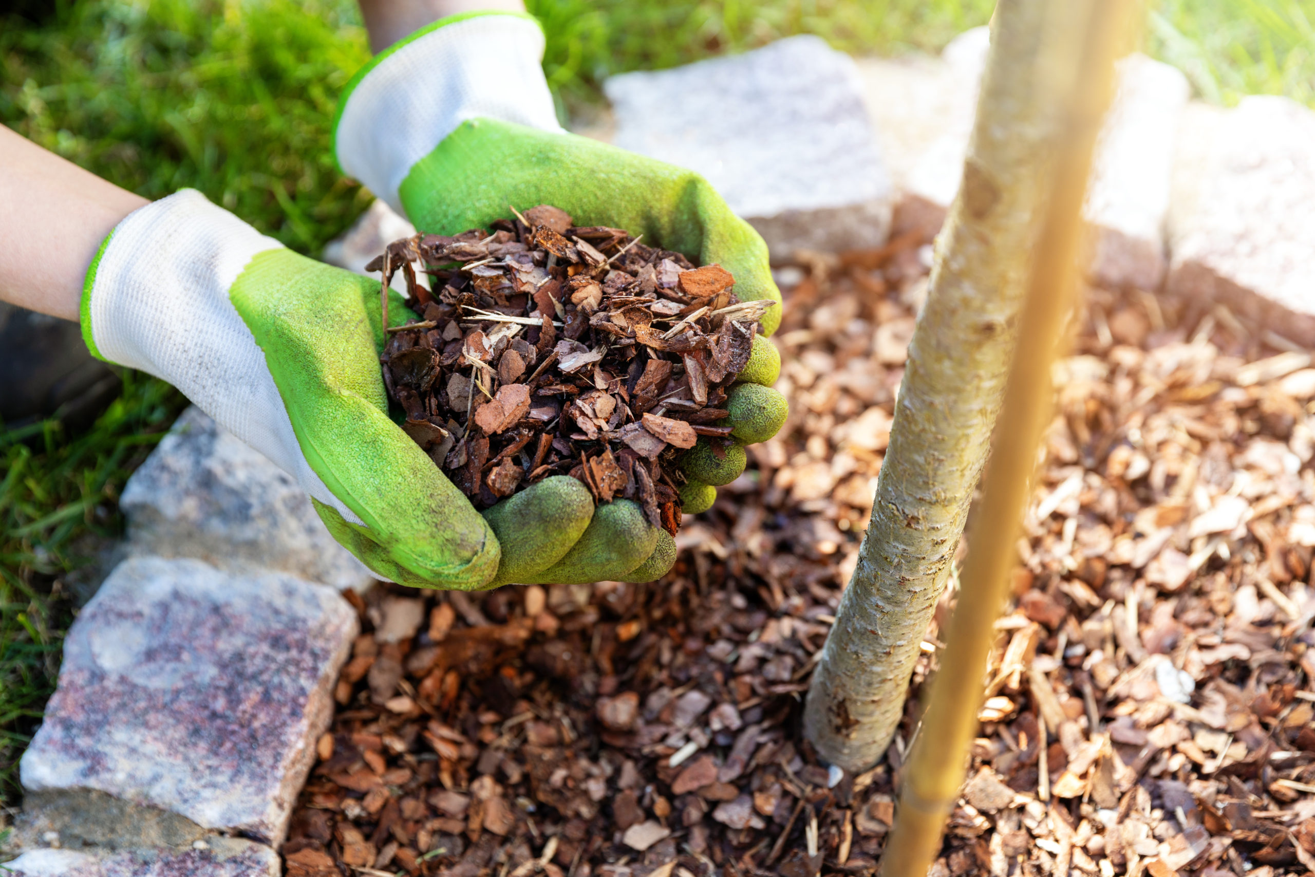 How to Prepare Your Yard for Winter